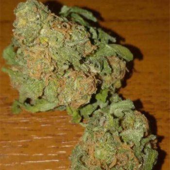 Bubble Gum Marijuana Strain UK
