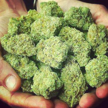 Blue Cheese Marijuana Strain UK